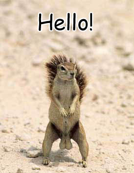 Hello Squirrel ♥ 158 Comment
